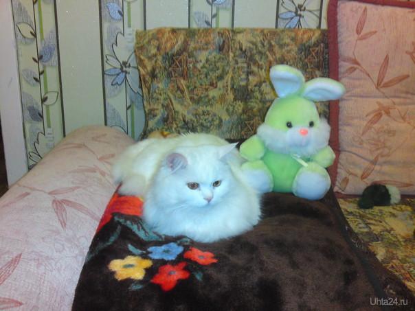 С наступающим годом кота и зайца! Питомцы Ухта