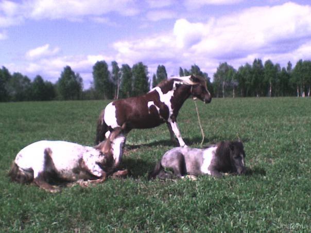 Лучшая лошадь Ухты Питомцы Ухта