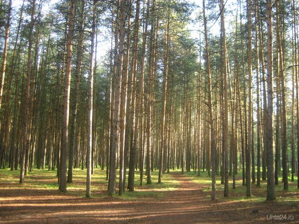 Детский парк очень ранним утром Природа Ухты и Коми Ухта