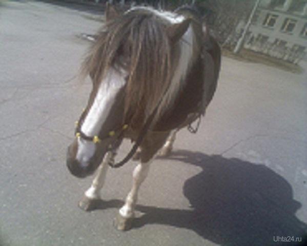Лошадь года Питомцы Ухта