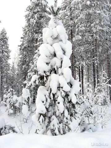 2011г.Зимний лес Природа Ухты и Коми Ухта