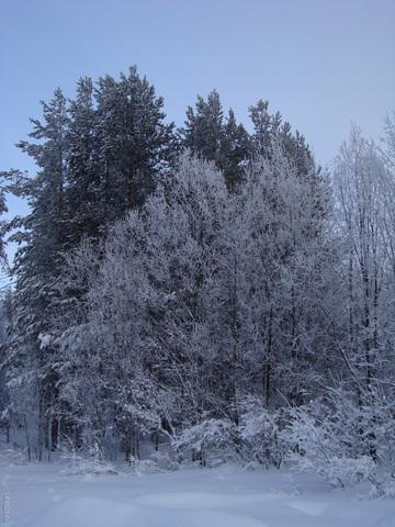 Зимний лес. Природа Ухты и Коми Ухта