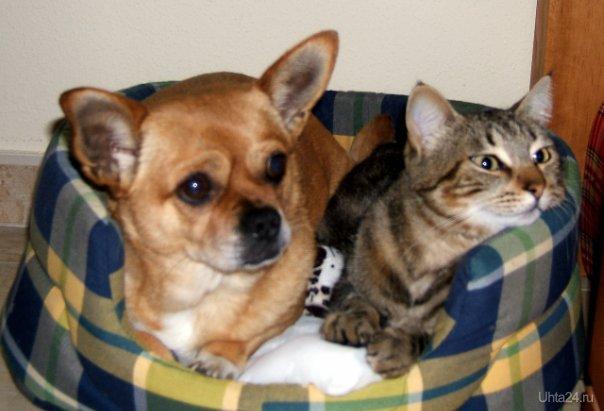 Линда(которая рыжая) и Лоло(кот) Питомцы Ухта