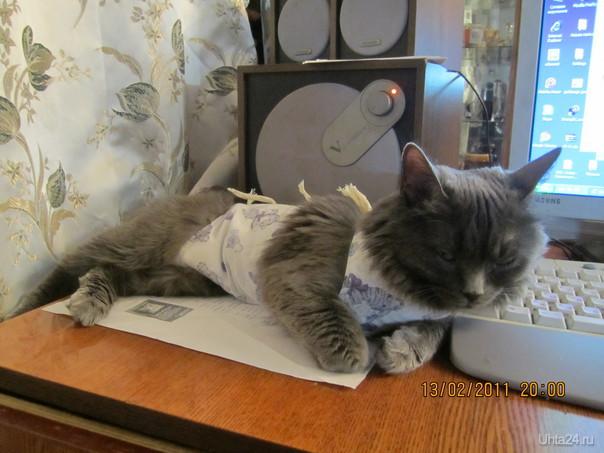 любимая кошечка,возле своего любимого компьютера. Питомцы Ухта