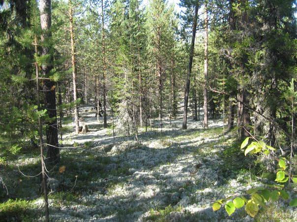 лес:) Природа Ухты и Коми Ухта