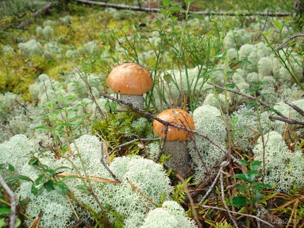 Эх, за грибочками бы .... Природа Ухты и Коми Ухта