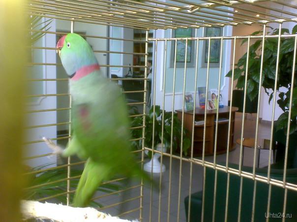 Попугай в клетке Питомцы Ухта