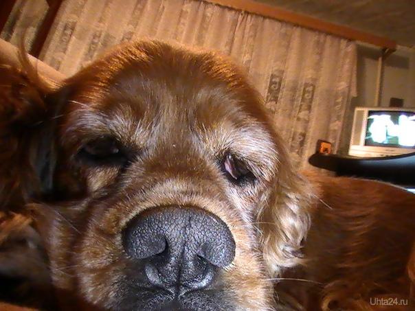 собака Питомцы Ухта