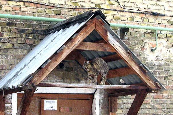 Кот мурчит на крыше От весны балдея. Всё весною дышит И живёт всё ею ... Питомцы Ухта