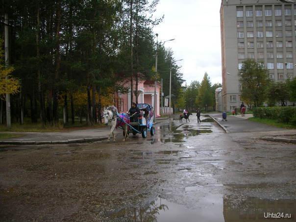 Возле Детского парка Питомцы Ухта