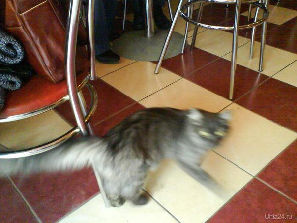 23.04.2011 кошка гуляла в пиццерии, и не хотела уходить, 3 раза возвращалась :) Питомцы Ухта
