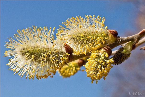 весна Природа Ухты и Коми Ухта