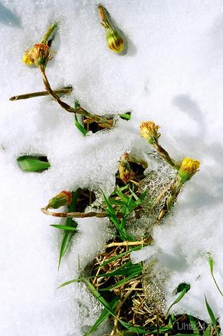 И это весна Природа Ухты и Коми Ухта