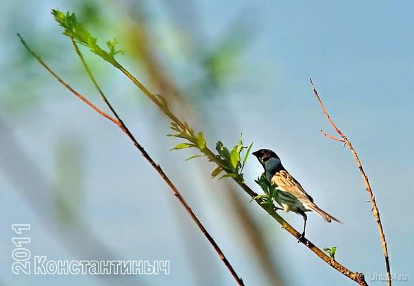 на страже гнезда Природа Ухты и Коми Ухта