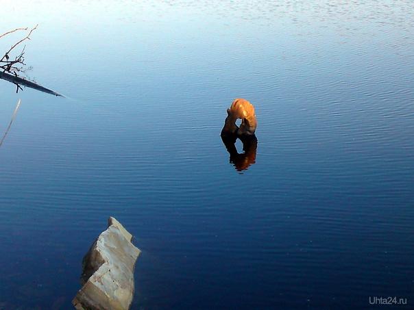 Озеро на Нижнем Доманике. Чужой? Несси? 1  июня 2011 Природа Ухты и Коми Ухта