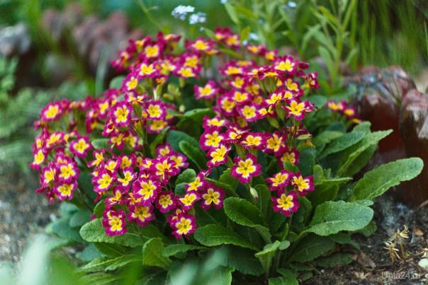 зацвели северные цветики... Природа Ухты и Коми Ухта