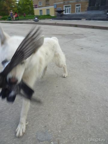 Первомайская площадь, дети кормили голубей....  Разное Ухта