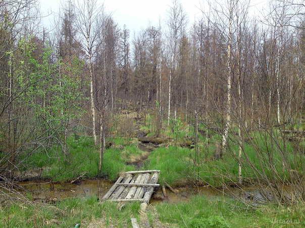 Лес вокруг Яреги погибает. В канаве течет нечто с запахом хлора....ЭКОЛОГИИИИИ.аууууу! Природа Ухты и Коми Ухта