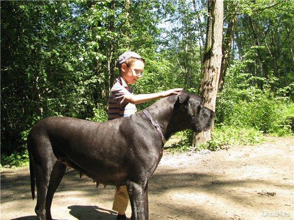 Зорта и мальчик , встретившийся с нами в лесу.За кадром - адекватная бабушка мальчика. Питомцы Ухта