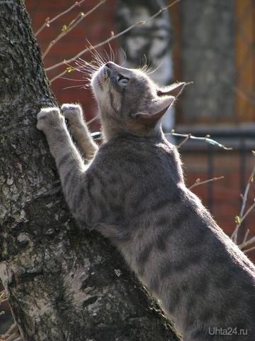 Кошка, гуляющая сама по себе. Попалась около моста в парке КиО, недалеко от Бушуева 1. Выглядела уверенно и радовалась жизни. Питомцы Ухта