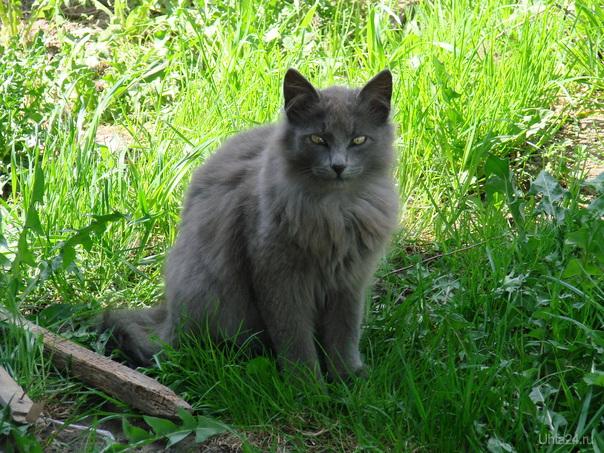 Дикий кот...   Питомцы Ухта