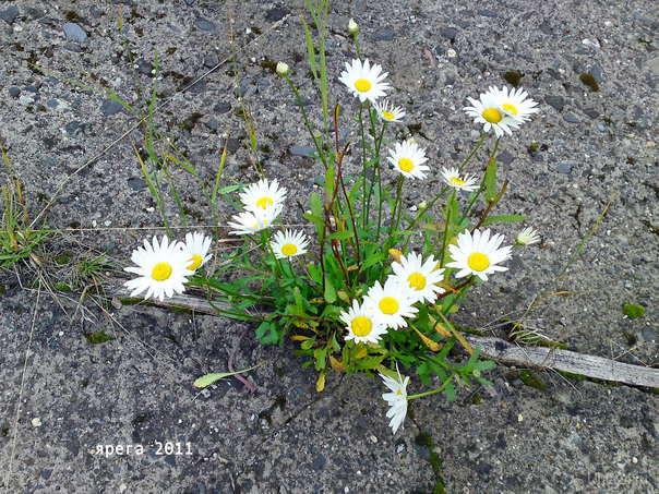 Последние краски лета... фото от 2 сент. 2011. Природа Ухты и Коми Ухта
