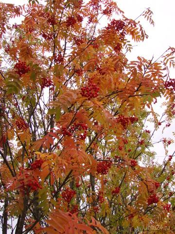 Вот и осень наступила..... Природа Ухты и Коми Ухта