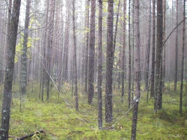 Туман. Ловушка для сказок.... Природа Ухты и Коми Ухта