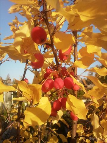 ...яблочки ) Природа Ухты и Коми Ухта
