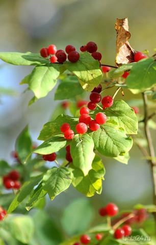 Люди, кто знает что за ягода? Природа Ухты и Коми Ухта