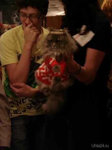 международная выставка кошек в Сыктывкаре(WCF)г.Сыктывкар 10-11 Сентября  Мероприятия Ухта