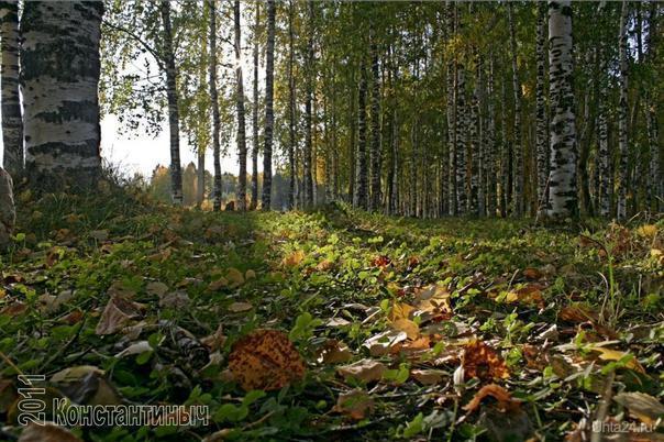 осень (парк КиО) Природа Ухты и Коми Ухта