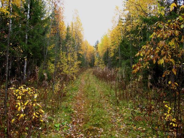 Осень наступила  Ухта
