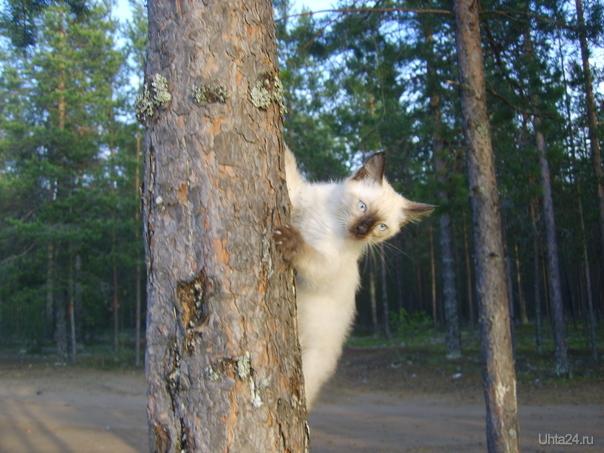 Котенок по имени Феликс недавно стал моим питомцем. Очень любит гулять на природе. Питомцы Ухта