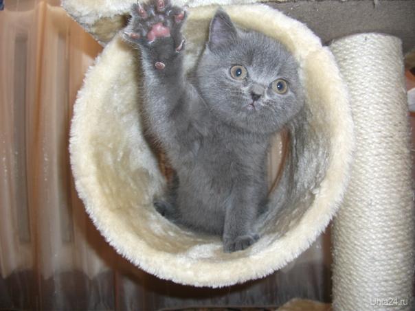 кот Макс Питомцы Ухта