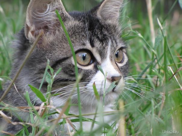 Сёма кот Питомцы Ухта