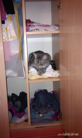 А мне с квартиркой страшно повезло... И я не вылезу отсюда, не просите... Мне в этом шкафчике так сухо и тепло.. Желанье будет - ко мне в гости заходите! Питомцы Ухта
