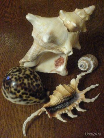 Коллекция ракушек. Особенно удивительная та, которая похожа на скорпиона (Лямбис скорпио) Творчество, хобби Ухта