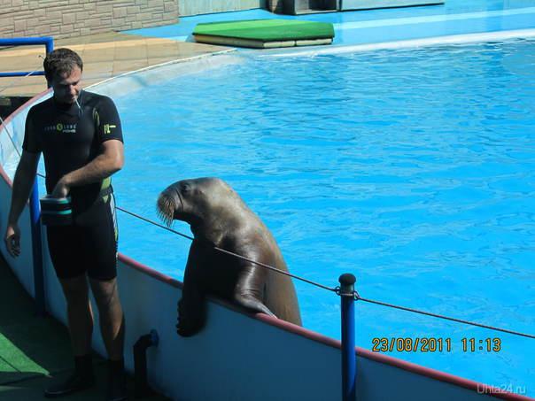 Дельфинарий  Ухта