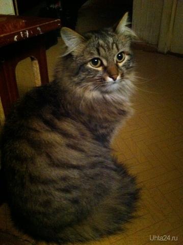 все тот же котик)))) Питомцы Ухта