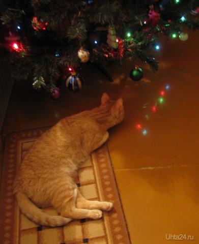 А Дед Мороз куда ушел?  Ухта