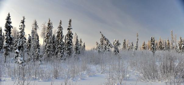 Зима-1 Природа Ухты и Коми Ухта
