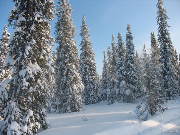 вот зто зимний лес, мороз -40 Природа Ухты и Коми Ухта