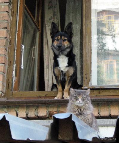 2011г. Пёс и Кот. Питомцы Ухта