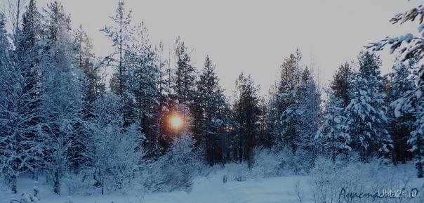 зимняя картина Природа Ухты и Коми Ухта