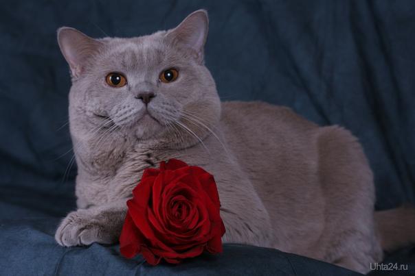 С 8 марта, кошки !!! :)) Питомцы Ухта