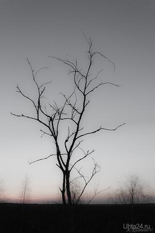 На закате... Природа Ухты и Коми Ухта