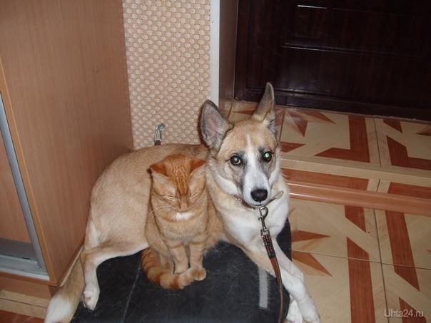 Живут как кошка с собакой Питомцы Ухта