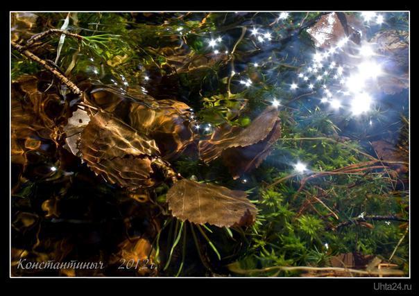 лесной ручеёк Природа Ухты и Коми Ухта