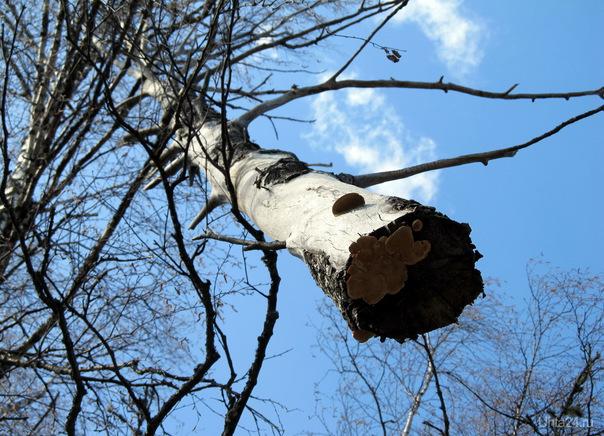 2012г. В лесу.  Ухта